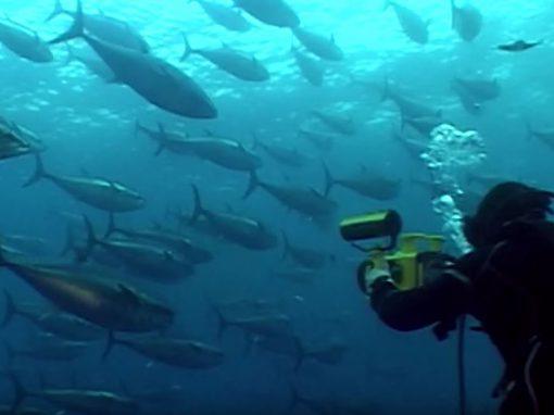 Making of 5D film in Malta